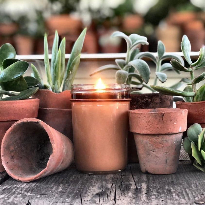 Preparing Your Succulents For Fall Season