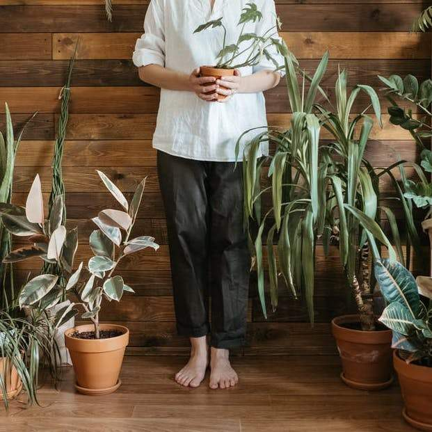 The Ultimate Guide on How to Choose and Care for Indoor Plants