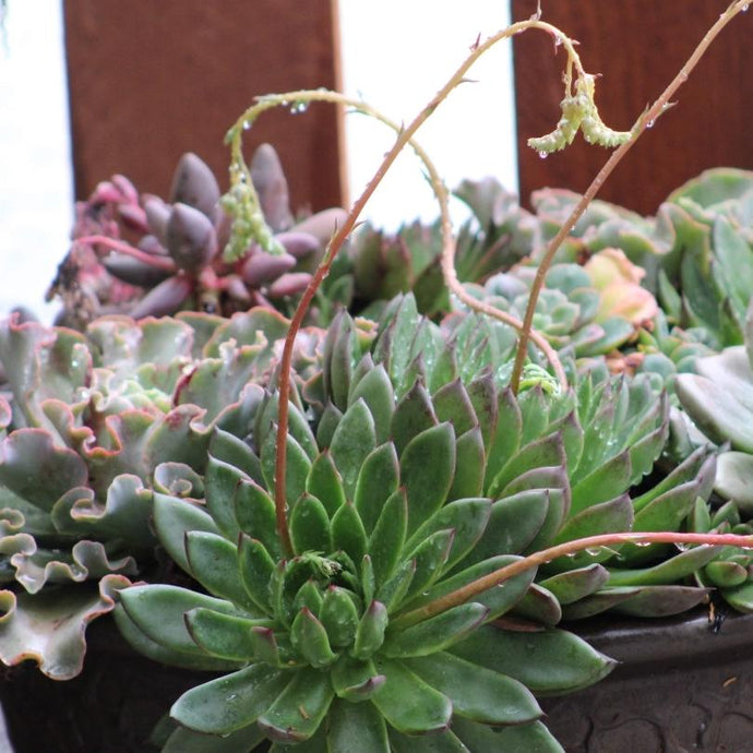 How Does Rain Affect Succulent Gardens - 5 Things to do After it Rains
