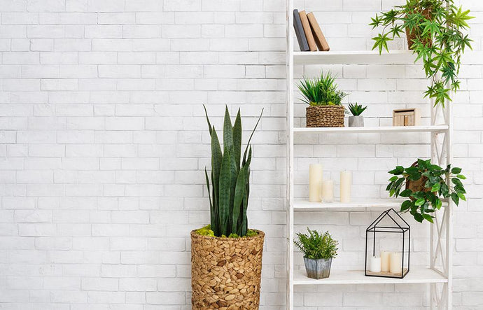 The Amazing Benefits of Succulents in Your Apartment