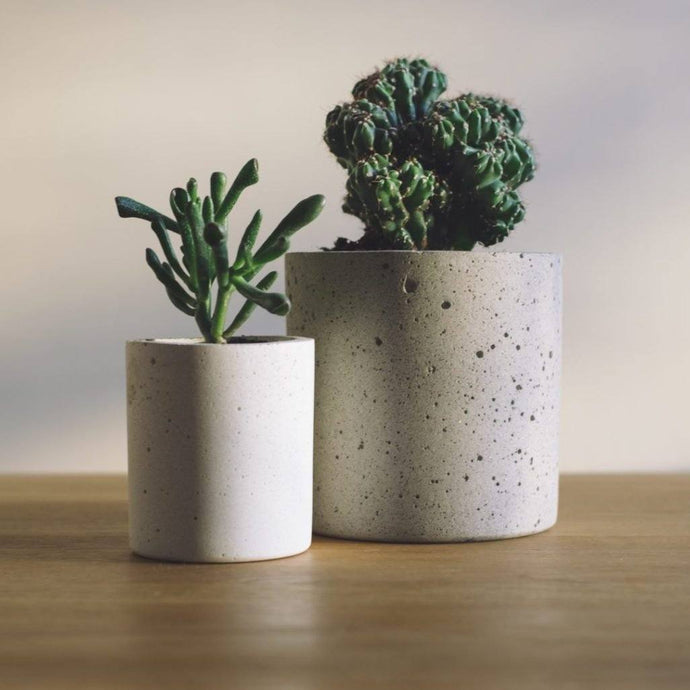 How to Keep Succulents Alive Indoors
