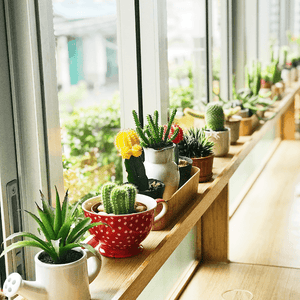 Top 5 Tips To Choosing Indoor Succulents