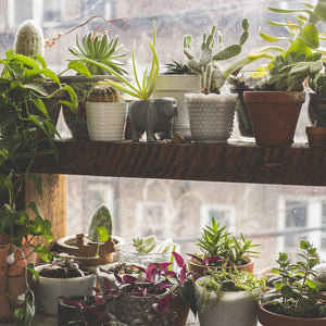 How to Care for Succulents Indoors During Winter