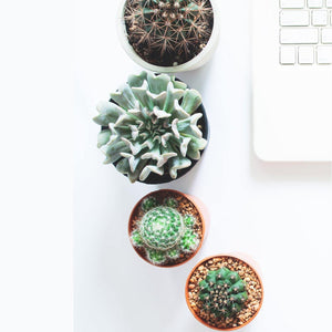 Tips for buying succulents online this winter