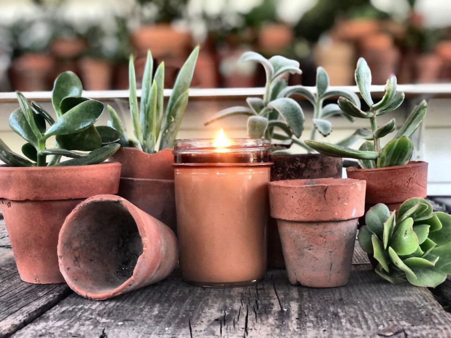 Preparing your Succulents for Fall Transition