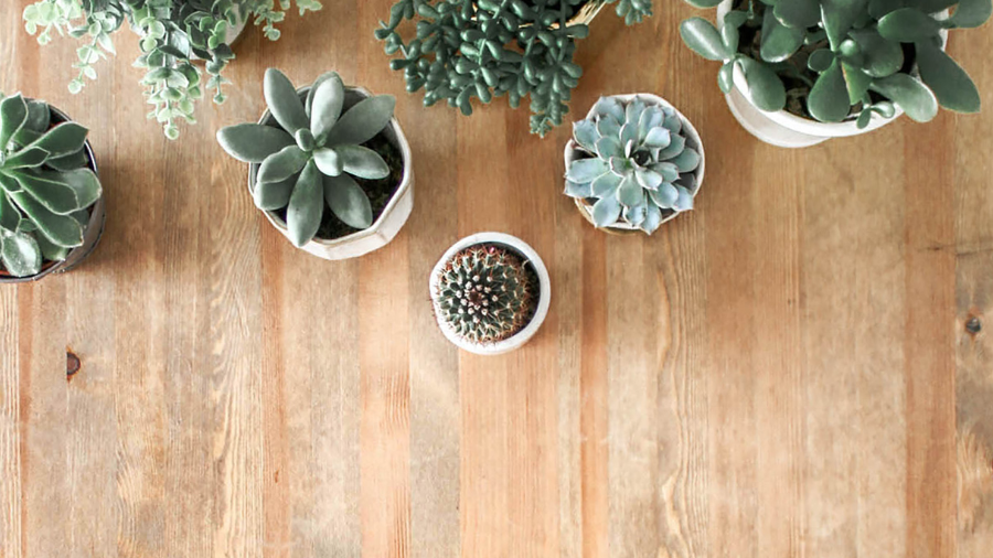 Hardest Succulents to Grow and Care For