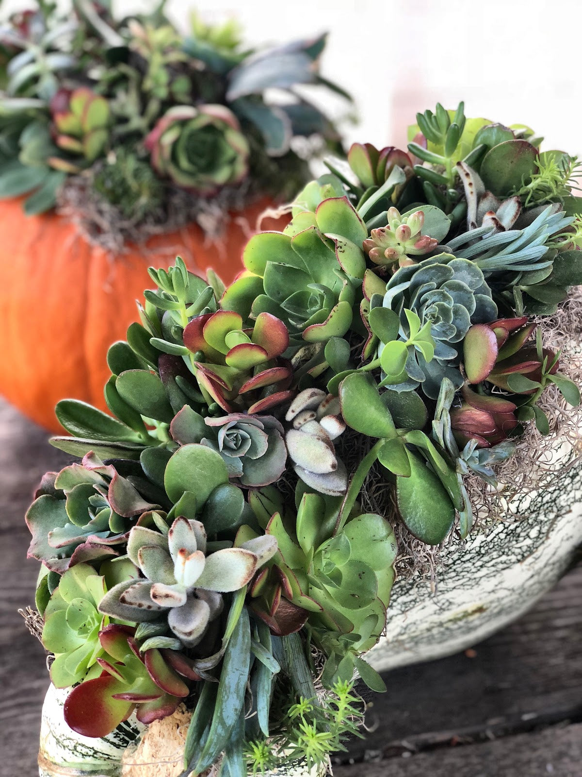 Succulent Pumpkin Arrangement DIY