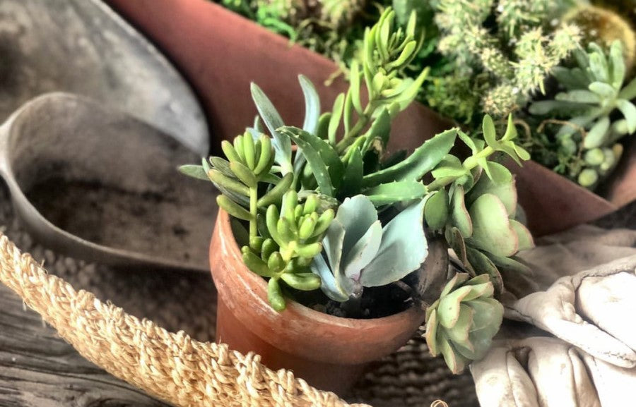The Best Succulents for Fall Season