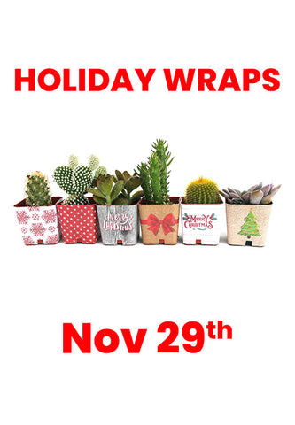 Succulent Holiday Wraps