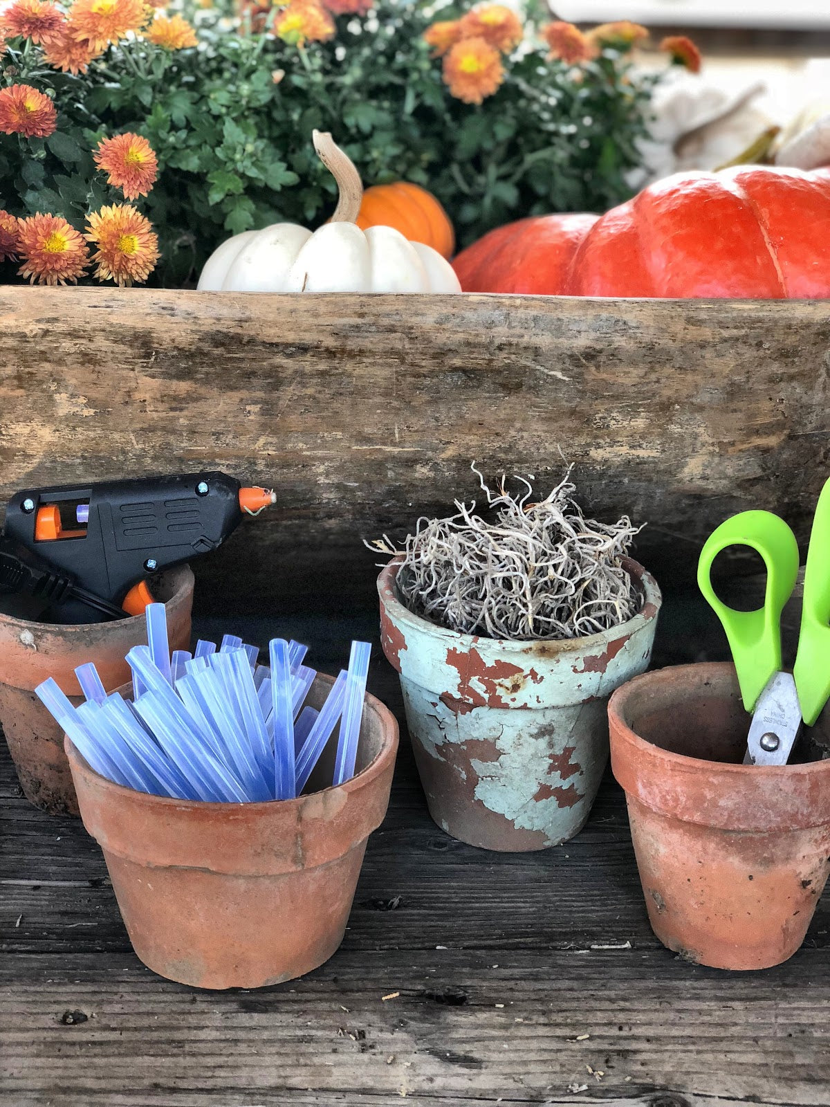 Tools needed to create succulent pumpkin arrangement