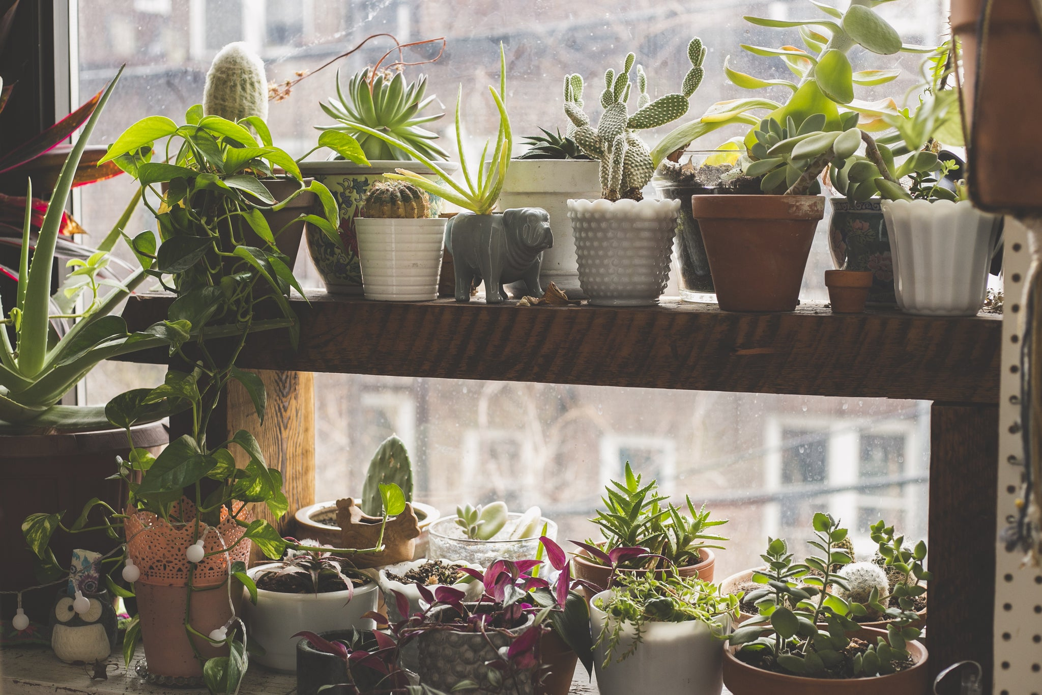 How To Care For Succulents Indoors During Winter Harddy