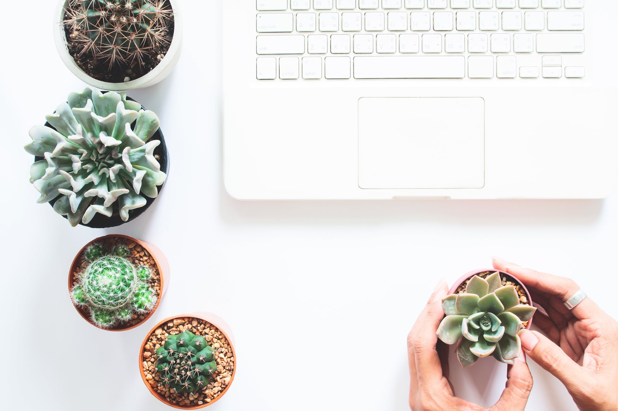 Tips for buying succulents online blog post