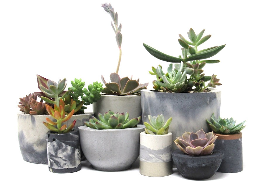 Do succulents like small pots?