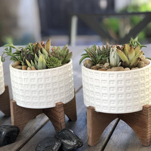 Corporate Event Succulents | Pack | Harddy