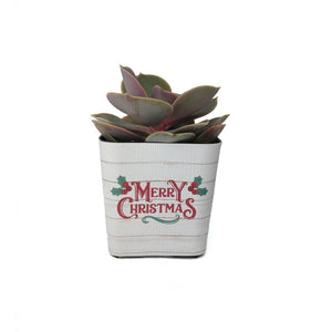 Christmas Succulent Wraps
