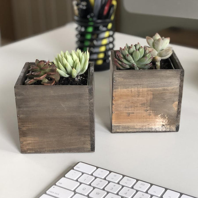 Rustic Duo Wood Box with 2in Succulents | Succulent Arrangement | Harddy