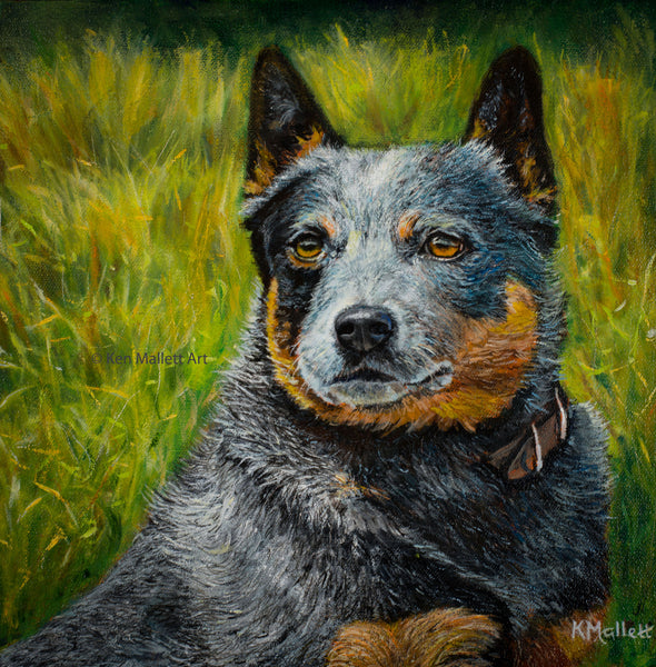 """Where's the Beef?  Australian cattle dog"