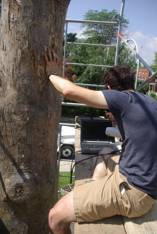 preparing a 3d scan of a tree