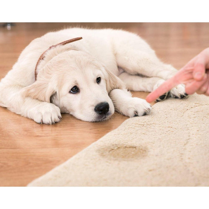 Dr Foamy Enzyme Carpet Cleaner Eliminates Dog Stains