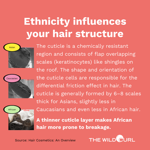 Ethnicity influences your hair structure