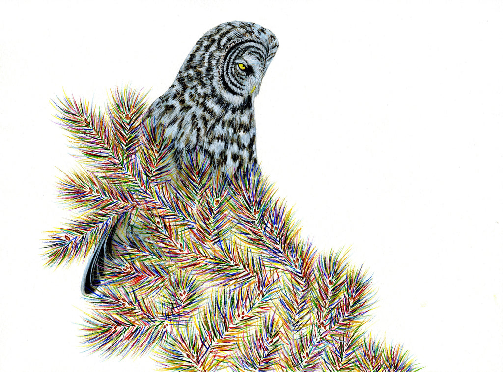 Great Grey Owl in the Trees Prints by Carrie Marill