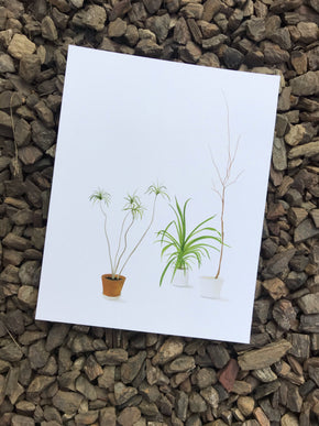 "House Plant 6 11"" x 14"" Print [Limited Run]"