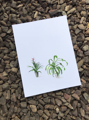 "House Plant 8 11"" x 14"" Print [Limited Run]"