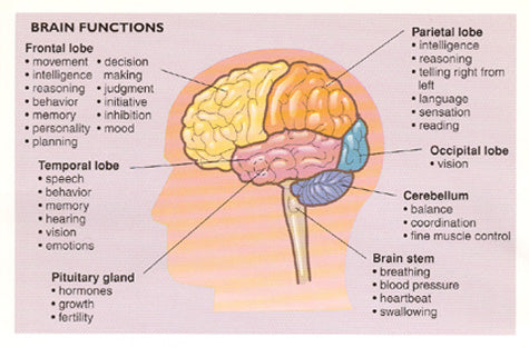 Brain Fuctions