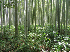 Bamboo Earth