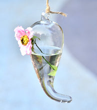 Creative Bottle Hanging Glass Hydroponic Vase