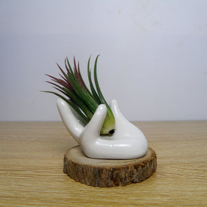 Creative Hands Natural Elements Ceramic Shelf for Flowers Wood Base