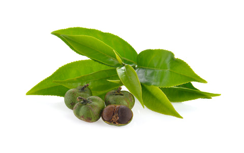 Camellia Seed is a carrier oil to combat dry hair and oily hair by infusing with custom hair oil and fragrance oils