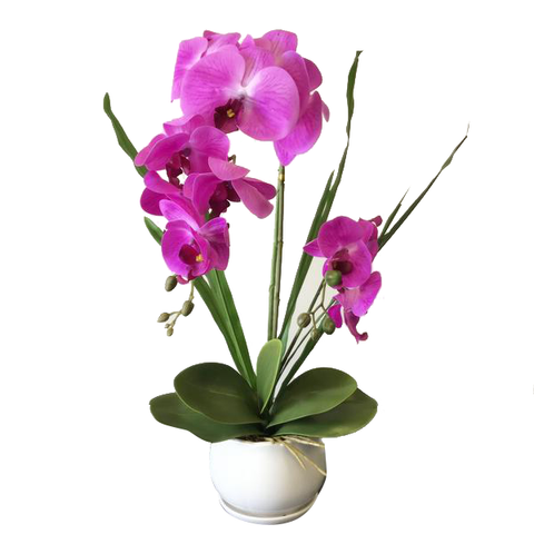 Real touch Orchid flower with white ceramic pot