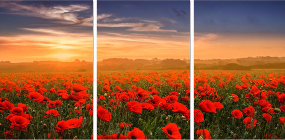 Poppy Field Acrylic Wall Art Set of 3 50x70cm - Adore Home Living Perth WA