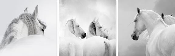 White Horses Acrylic Wall Art Set of 3 60x60cm