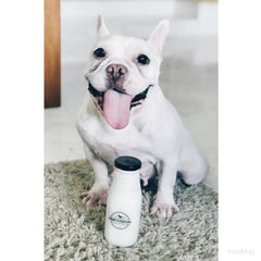 Craft & Culture Original Kefir for Pets