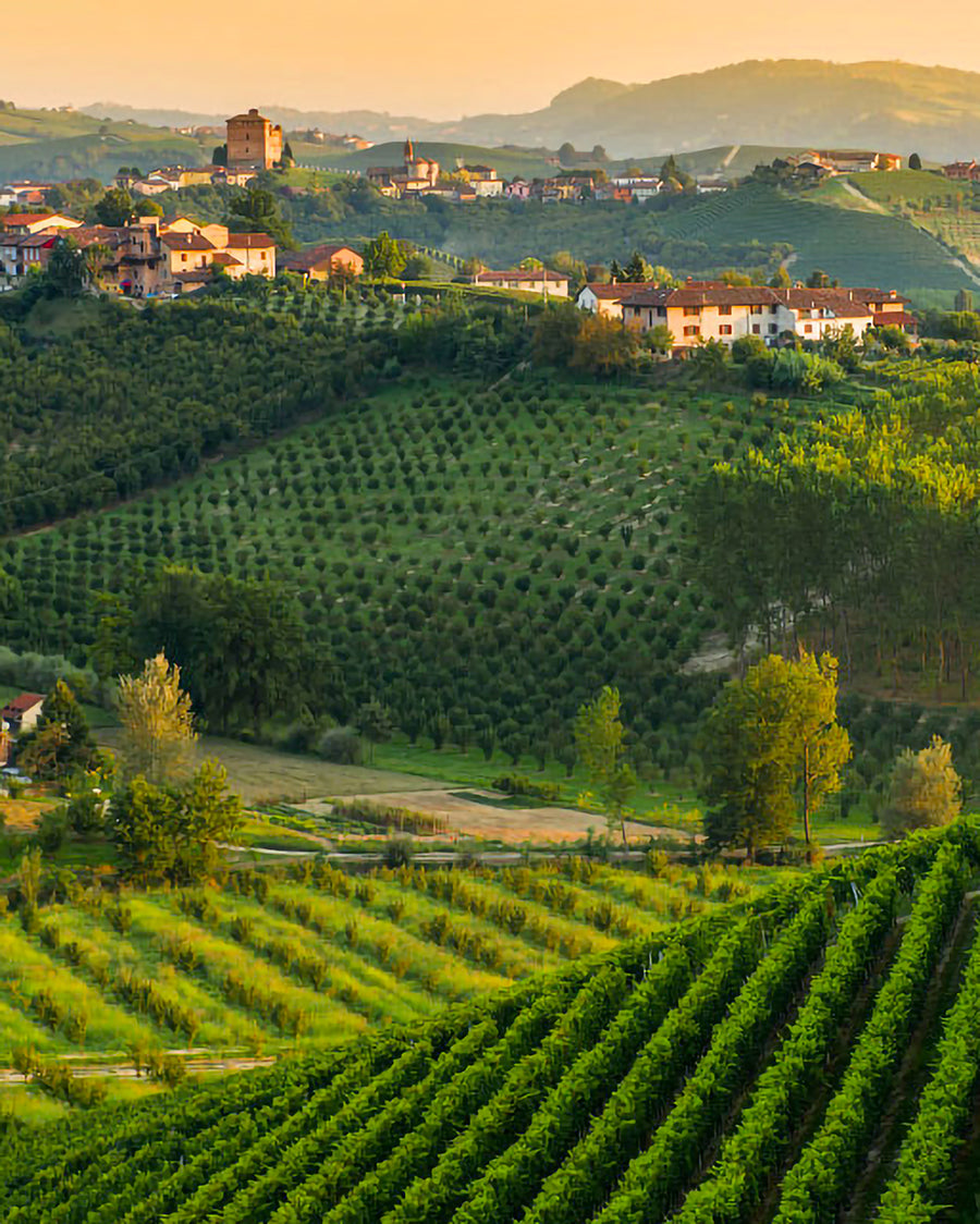 The door of Piedmont: the Basso Monferrato