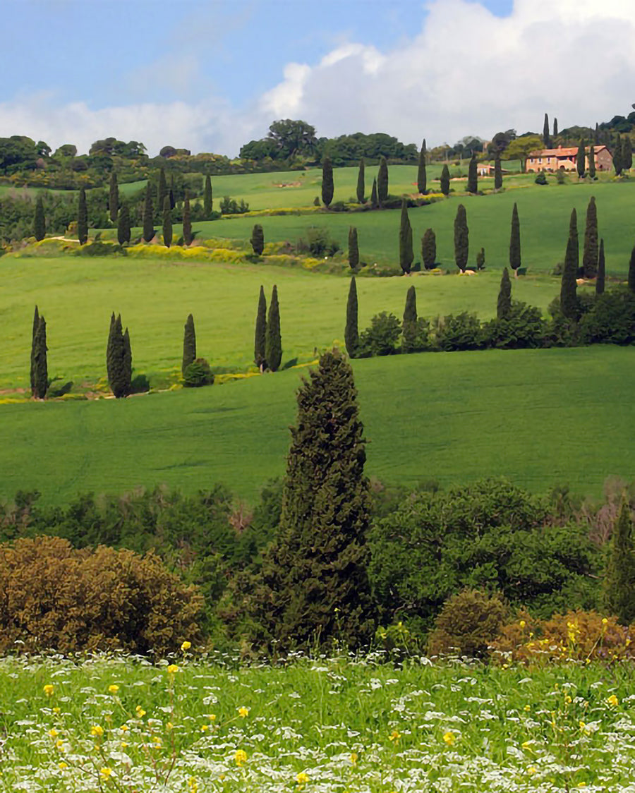 From Ribollita to Caciucco: Tuscany to table