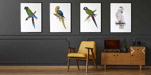 The Exotic Bird Drawing Collection
