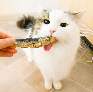 Feline friends can feast on our treats too!