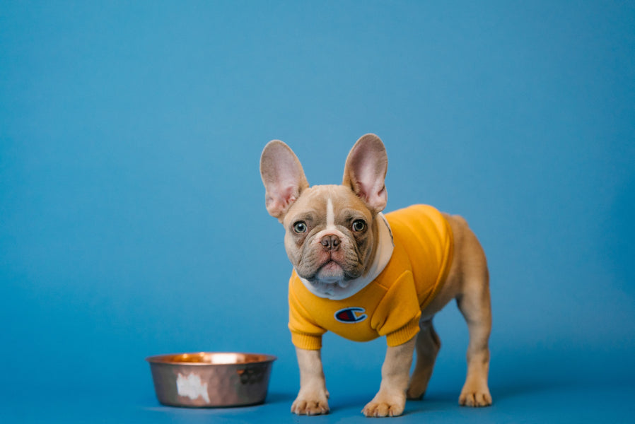5 Common Dog Food Ingredients To Avoid