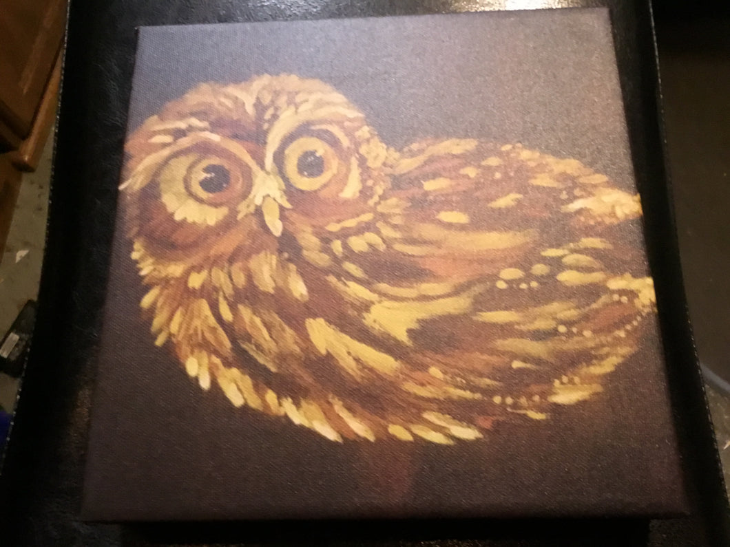 Owl on canvas