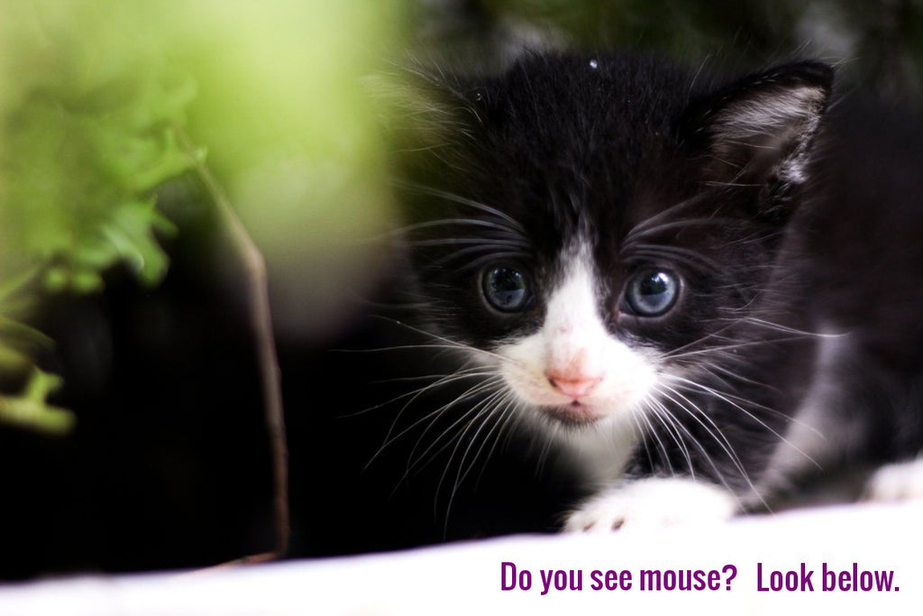 Cat sees mouse