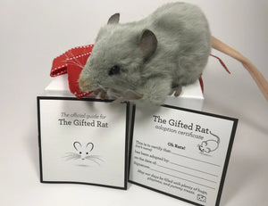 Gray Stuffed Mouse