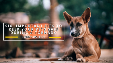 Six  Important Tips to Keep Your Pets Safe During a Tornado