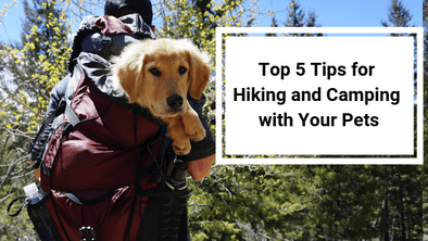 Top 5 Tips for Hiking and Camping with Your Pets