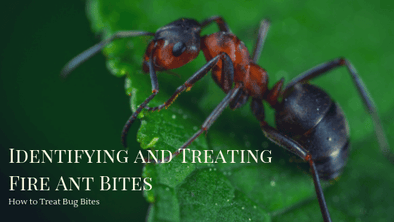How to Treat Bug Bites: Identifying and Treating Fire Ant Bites