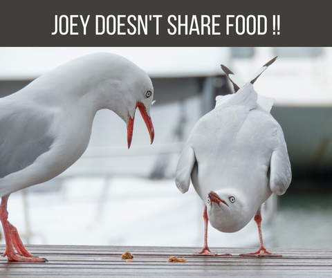 Do's and Don'ts of Camping Joey doesn't share food