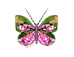 Raspberry Lime  Butterfly Notecard