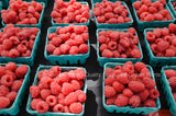 Potted Autumn Britten Everbearing Red Raspberry Plants - Large & Sweet